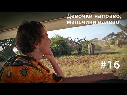 Планирование семьи у африканских слонов (18+)