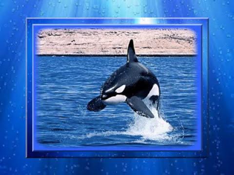 Delfinek a tenger fényeiben…