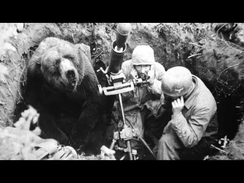 The Heart-Melting Story Of Wojtek, The Soldier Bear