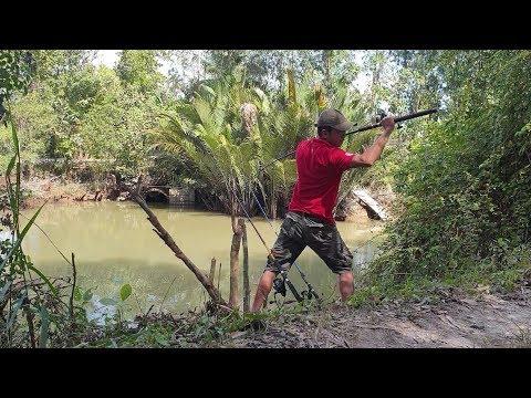Đi câu cá gập rắn chà bá lội sông. Mới xuống cần đả dính cá | Săn bắt SÓC TRĂNG | - Thời lượng: 32 phút.