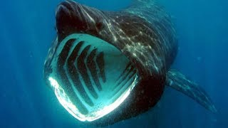 BIGGEST Animals You Won't Believe Exist by Epic Wildlife