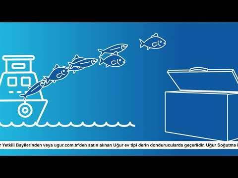 Vira Bismillah! Balık Sezonu Açıldı