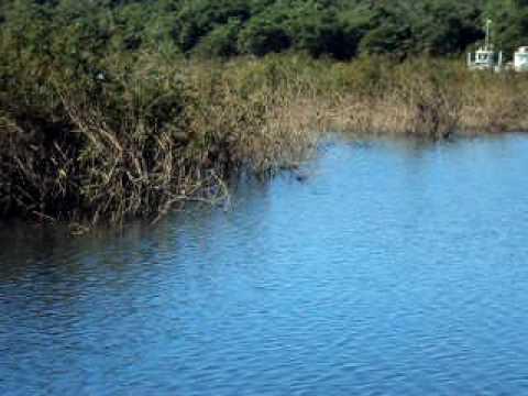 Pai  pescando tucunare em Anhanguera Goias
