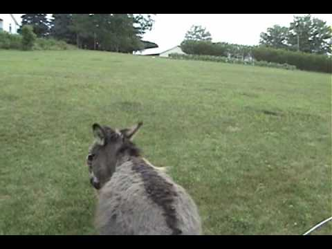 Donkey - Two friends having a good time. see this too: http://www.youtube.com/watch?v=0RQmZtEtR18.