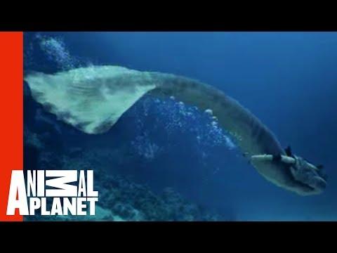 Mermaids Attacked By Giant Shark   Mermaids