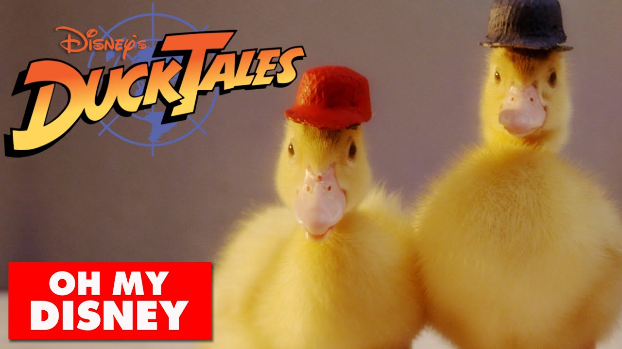 This Happened: Real Ducks Recreate DuckTales Theme Song