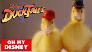 DuckTales Theme Song With Real Ducks