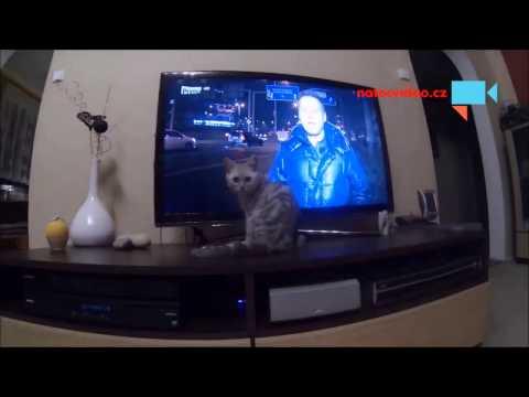TV Primu sleduje i naše číča