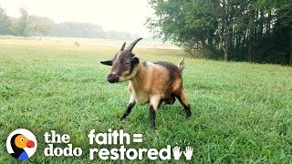 Goat Who Couldn't Walk Teaches Herself To Run | The Dodo Faith=Restored by The Dodo