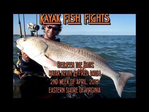 Between two baits - kayak fishing, kayak photos, kayak videos
