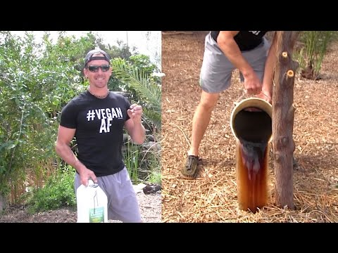 How to Feed & Fertilize a Fruit Tree, part 1