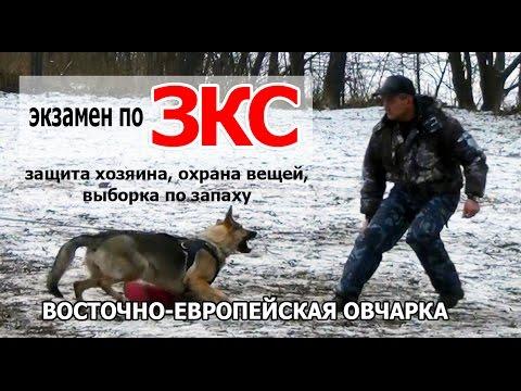 ВЕО на ЗКС - защитно-караульная служба дрессировка. Испытания по ЗКС. Собака Лера - DomaVideo.Ru