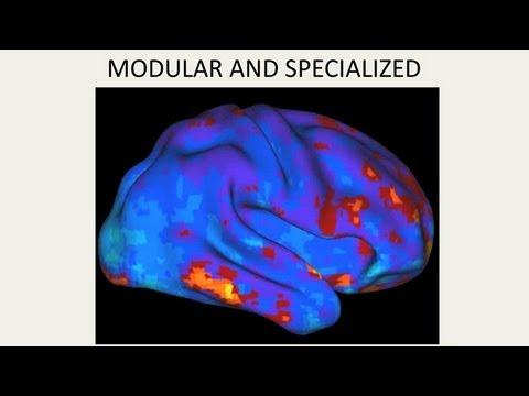 CARTA: Menschliche Merkmale des Gehirns