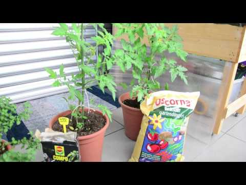 Gemüsedünger Test ★ Compo Guano vs. Oscorna Animalin
