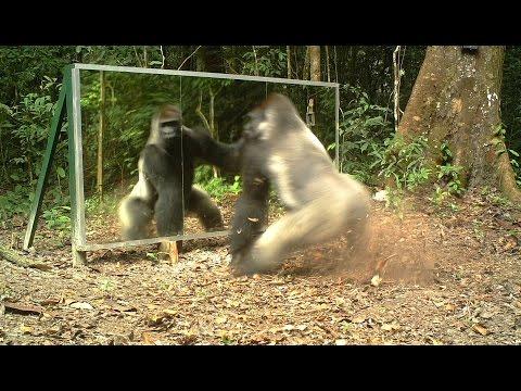 nella giungla gli animali si guardano allo specchio