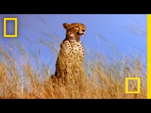 0 Cheetah Brunch