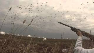 Chasse Printanière à L'oies Blanches 2014 / Snow Goose Hunting Spring 2014
