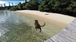 Sailing around the world, Catamaran Impi is in New Caledonia and one stop en-route Ile Des Pins sees us visit an abandoned Island Dog called Moose on Casy ...