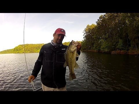 Basic Spinnerbait Bass Fishing