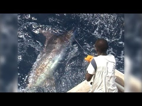 Ngeri! Video Mancing Ikan Black Marlin Monster Berat 300 kg