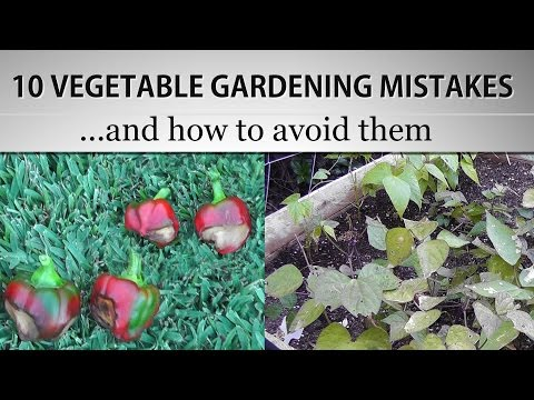 clips diy gardening gardens vegetables