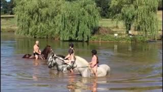 Baignades à cheval