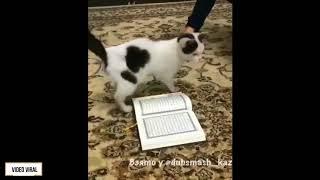 Nonton Benar Kah Semua Kucing Tidak Berani Menginjak Al Quran   Film Subtitle Indonesia Streaming Movie Download