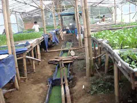 Download Video Aquaponik Sawi Randi Farm.MPG