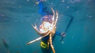 Portland United Kingdom  city pictures gallery : Spearfishing at Portland, south coast, Dorset, England
