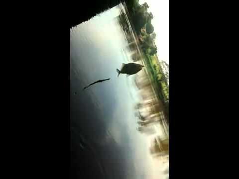 Pesca em pitangueiras SP