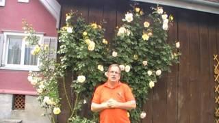 #83 Die Rose Parure d