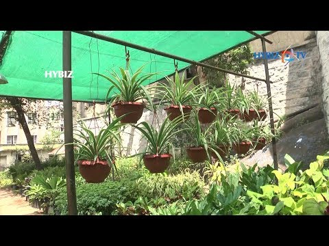 Plant Nursery in Masabtank Hyderabad