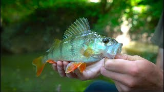 """Carl & Alex Channel — http://bit.ly/2uft0aABlue RIGGED Shirt here — http://bit.ly/2mqaOXzEngland Vlogs keep rolling! Here we go…Chapter II. In this half day fishing session Carl, Alex, and myself trek into the woods to hunt down the elusive ditch perch. While I always love trying to new things and fishing tiny waters was in slight disbelief of this next spot the two took me to. Needless to say my mindset quickly changed after setting hook into my first ever sizable redfin perch… pure epicness! Target species…—Carp —Redfin Perch—Gudgeon Tactics…— 6' 9"""" medium spinning rod— 2000 size spinning reel — 10lb braid main line— 8lb fluorocarbon leader— 2in crappie plastic— Dropshot rigWhat I film with…Drone — http://amzn.to/28SzZjwCamera — http://amzn.to/28WQz2yLens — http://amzn.to/28YGMYeGoPro — http://amzn.to/28SGyRFBIG SHINY Camera -- http://amzn.to/2dqwEZbBIG SHINY Lens -- http://amzn.to/2dqwxNtMy Other Gear...Computer — http://amzn.to/295J31nEditing software — http://amzn.to/28SzPIWMic — http://amzn.to/28R3QWTCamera Case — http://amzn.to/28SzO7PBackpack -- http://amzn.to/2dHgZaZFollow me on…SOUNDCLOUD -- http://bit.ly/2l4fqpDINSTAGRAM -- http://bit.ly/2l8ma5uTWITTER -- http://bit.ly/2lFa0iqSNAPCHAT: fishingthemwFACEBOOK -- http://bit.ly/2kHM8fx #ftmw*The above links are Amazon Associate links*"""