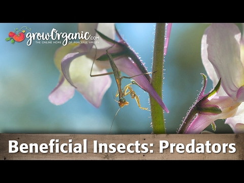 Beneficial Insects - General Predators