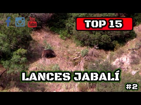 TOP 15 LANCES DE JABALÍ 2020 | WILDBOAR TOP SETS #2