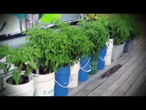Trucs de jardinage - La culture en pots