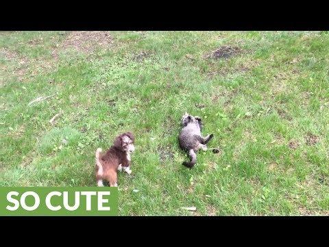il-cucciolo-ed-il-gattino