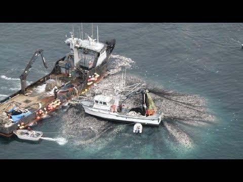 Unbelievable The Most Advance Fishing Vessel - Thời lượng: 11 phút.