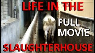 LIFE IN THE SLAUGHTERHOUSE - À L'ABATTOIR