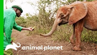 Finding Dololo The Elephant | Dodo Heroes: Courage Up Close by Animal Planet