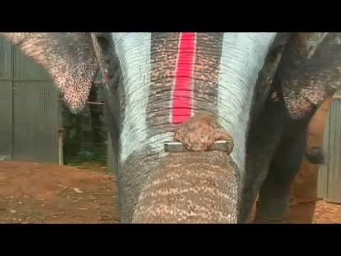 Indien: Mundharmonika-Elefant begeistert Besucher
