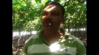 Pimpalgaon Khamb_Ganesh patil_Blast