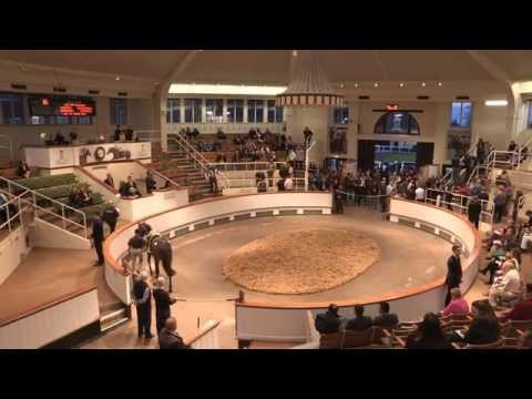 Tattersalls Craven Breeze Up Sale Day 1 Video Review 2015