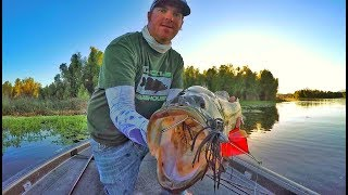 Video Buzzbaits Tricks You Didn't Even Know To Try! MP3, 3GP, MP4, WEBM, AVI, FLV Mei 2019