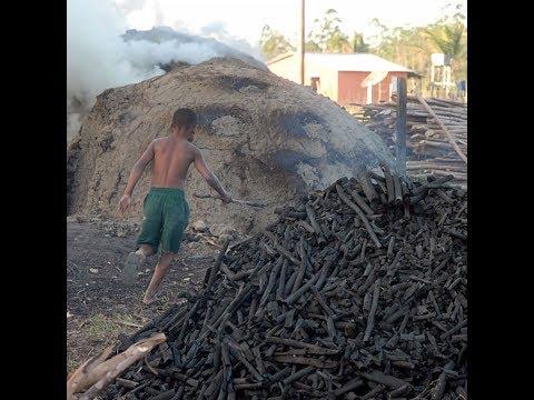 Desafios do Brasil: trabalho infantil cresce no campo