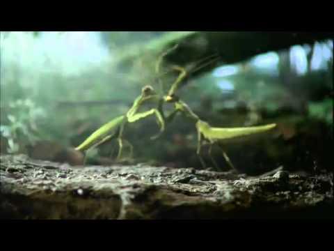 Volkswagen Beetle Забавная реклама автомобиля Volkswagen: Чёрный Жук