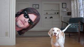 Dogs vs Norman Reedus Prank: Funny Dogs Maymo & Potpie by Maymo