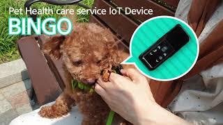 video thumbnail Doggo Healthcare service Bingo youtube