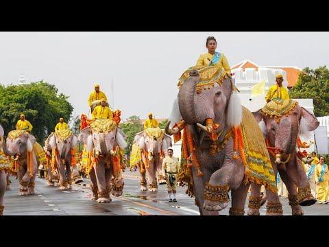 Dickhäuter-Ehrung: Elefanten verneigen sich vor Thail ...