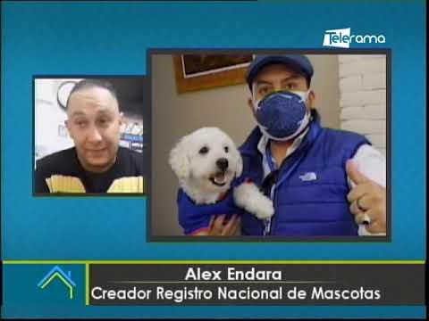 Petdulación: Cómo sacar la cédula para tu mascota en Ecuador